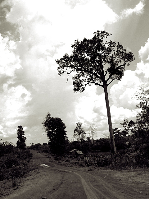 Country Road; Siem Reap, Cambodia; 2009