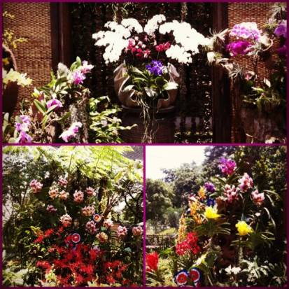 2013 orchid show-01