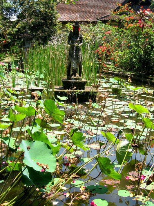 Lotus Pond; Ubud, Bali, Indonesia C2006
